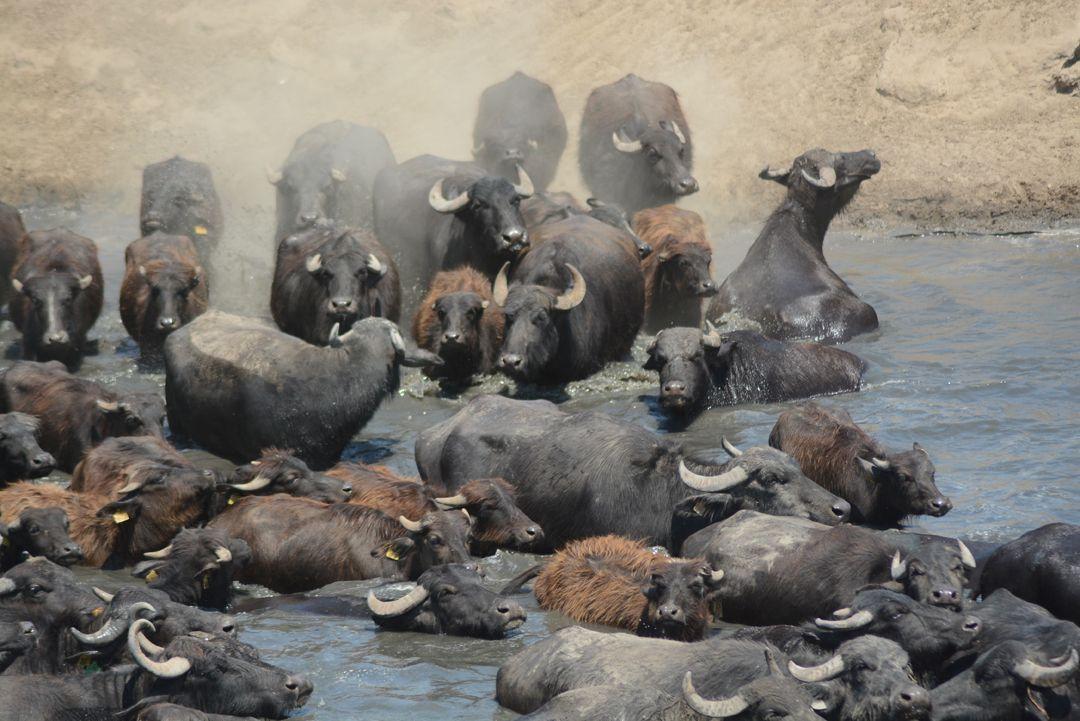 Afrika değil Balıkesir!.. Günün yarısını böyle geçiriyorlar! - Sayfa 1