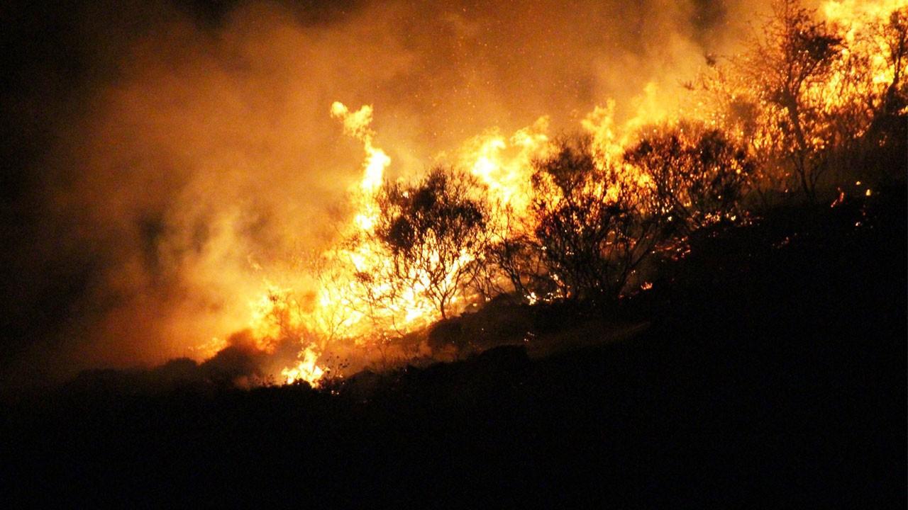 Bodrum'da korkutan yangın!.. 15 hektarlık alan kül oldu!