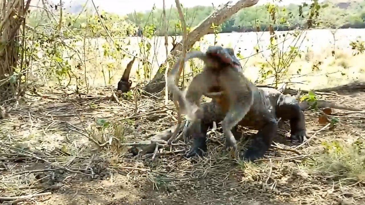 Canlı maymunu lokma lokma yedi - Sayfa 2