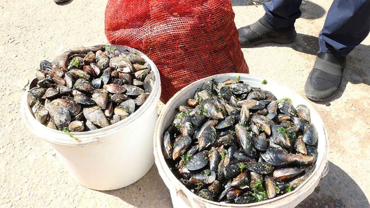 Balıkesir'de ele geçirildi!.. Bin 300 kilogram!