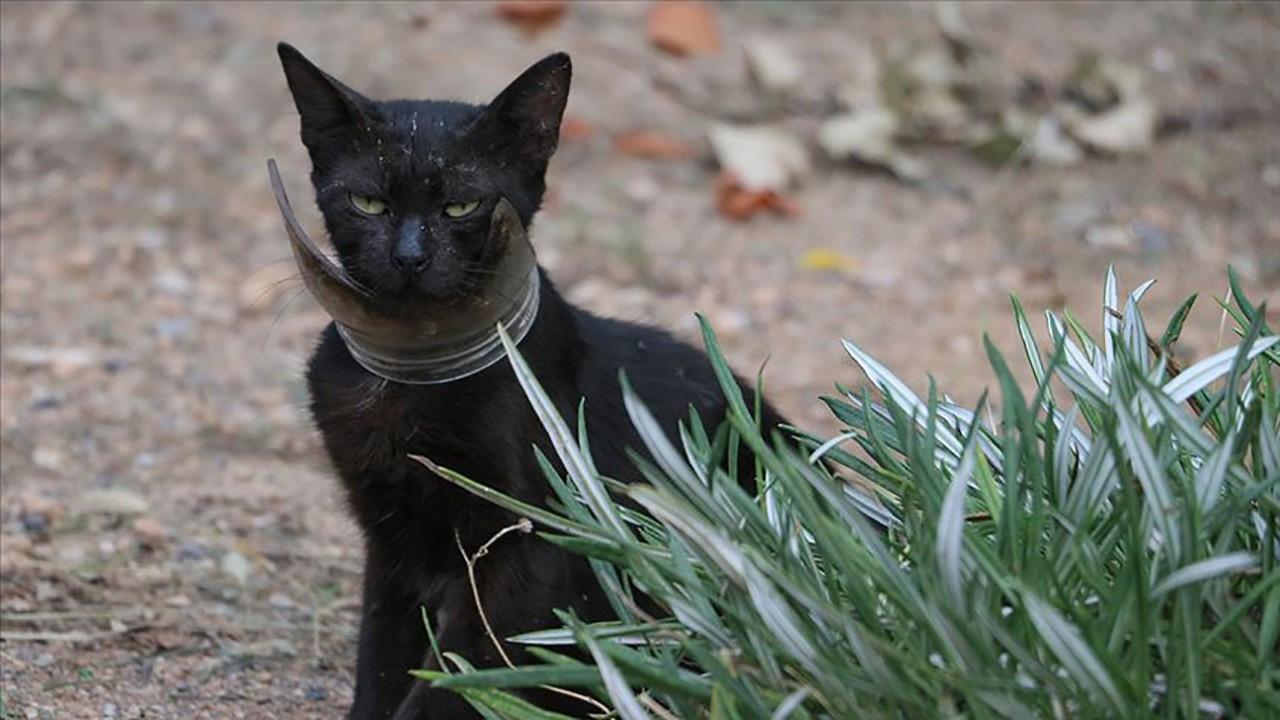 Kavanoza sıkışan kedi kurtarıldı!