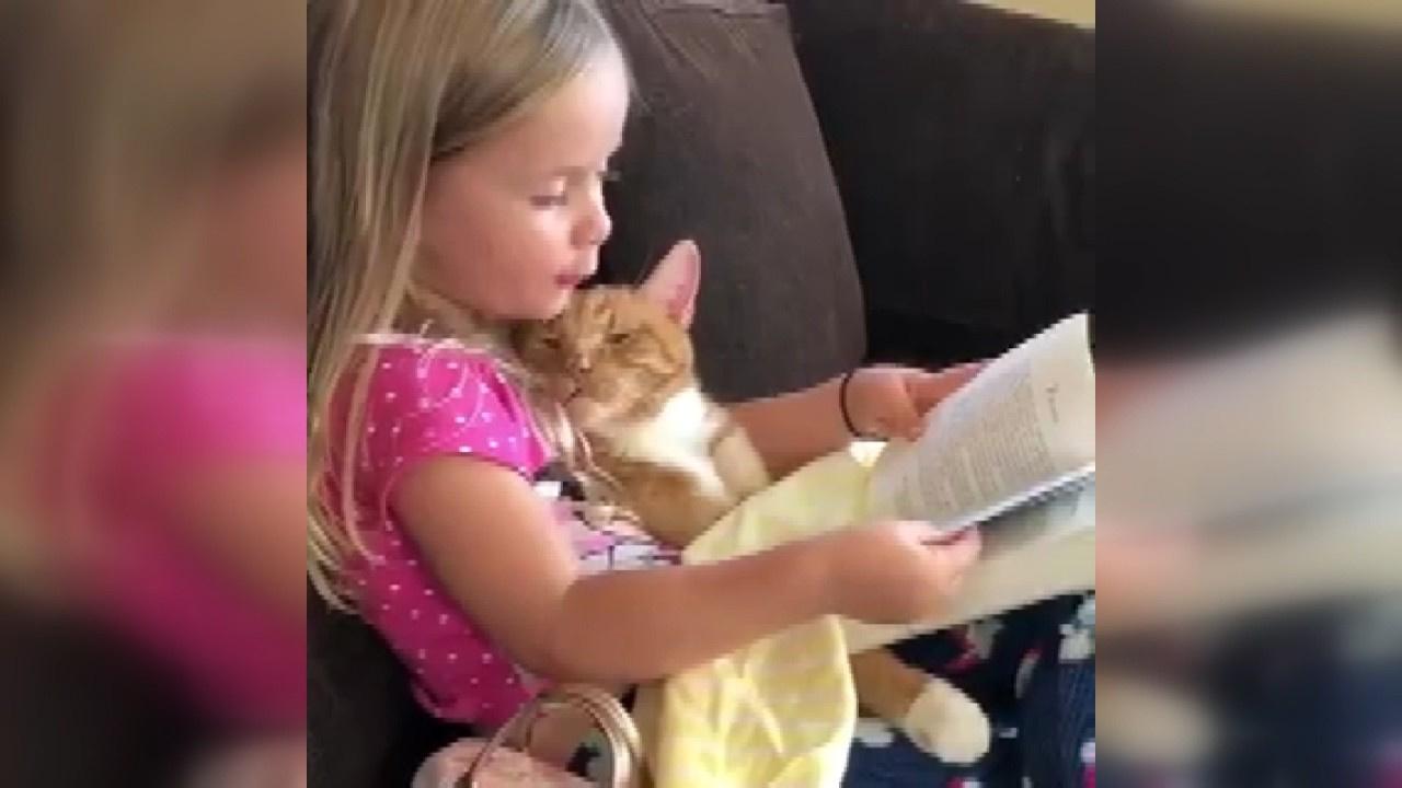 Kedisine kitap okudu
