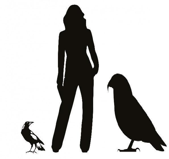 Papağanın insan ve diğer papağanlara göre boyutları