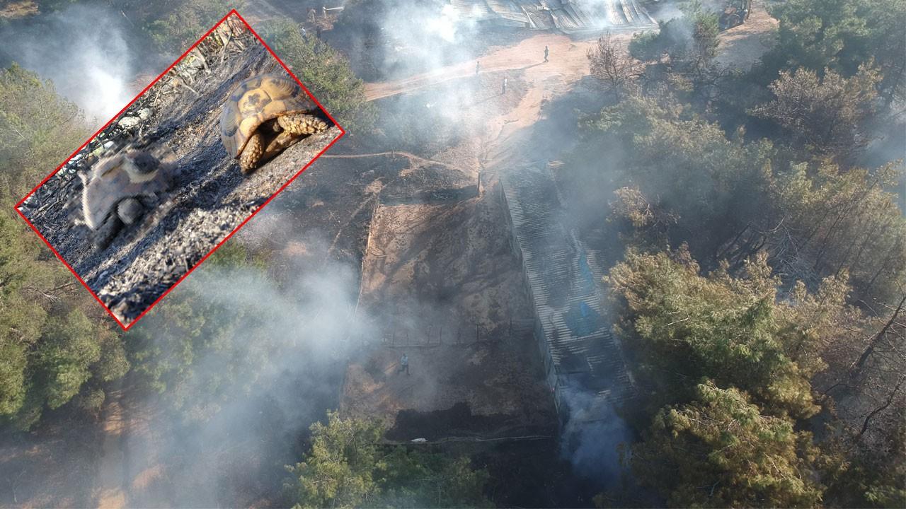 Tarihi Gelibolu Yarımadası'ndaki yangın kontrol altına alındı... Bilanço ağır!