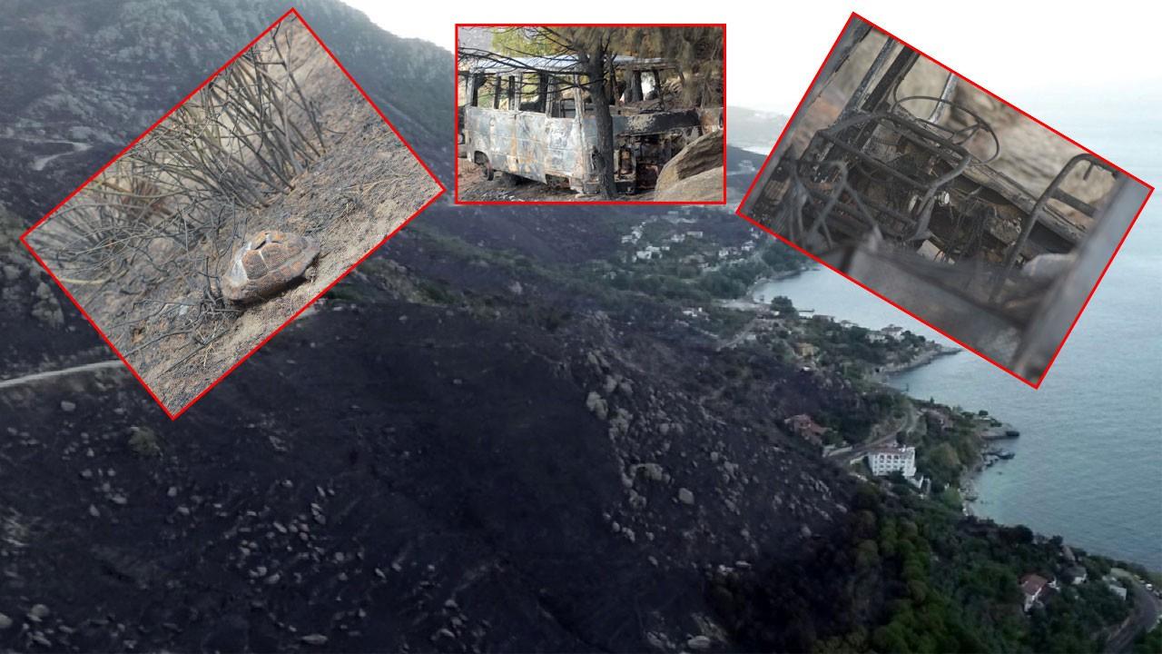 Ağır bilanço gün ağarınca ortaya çıktı!.. 80 hektar kül oldu!