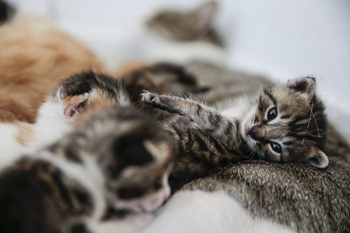 Ofisini yeni doğum yapan kedilere tahsis etti - Sayfa 1