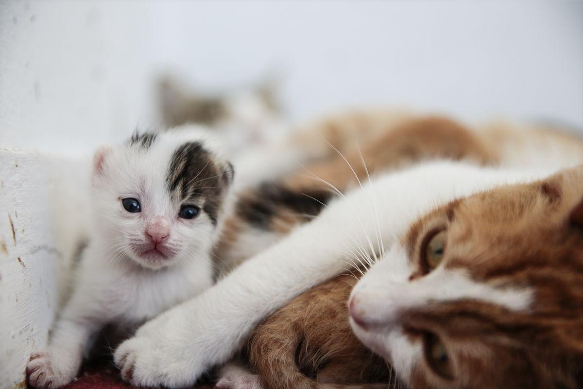 Ofisini yeni doğum yapan kedilere tahsis etti - Sayfa 2
