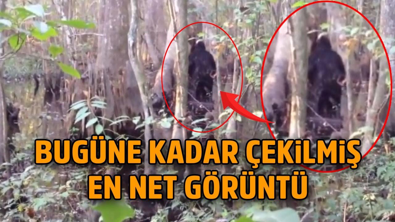 Issız ormanda kaydedildi