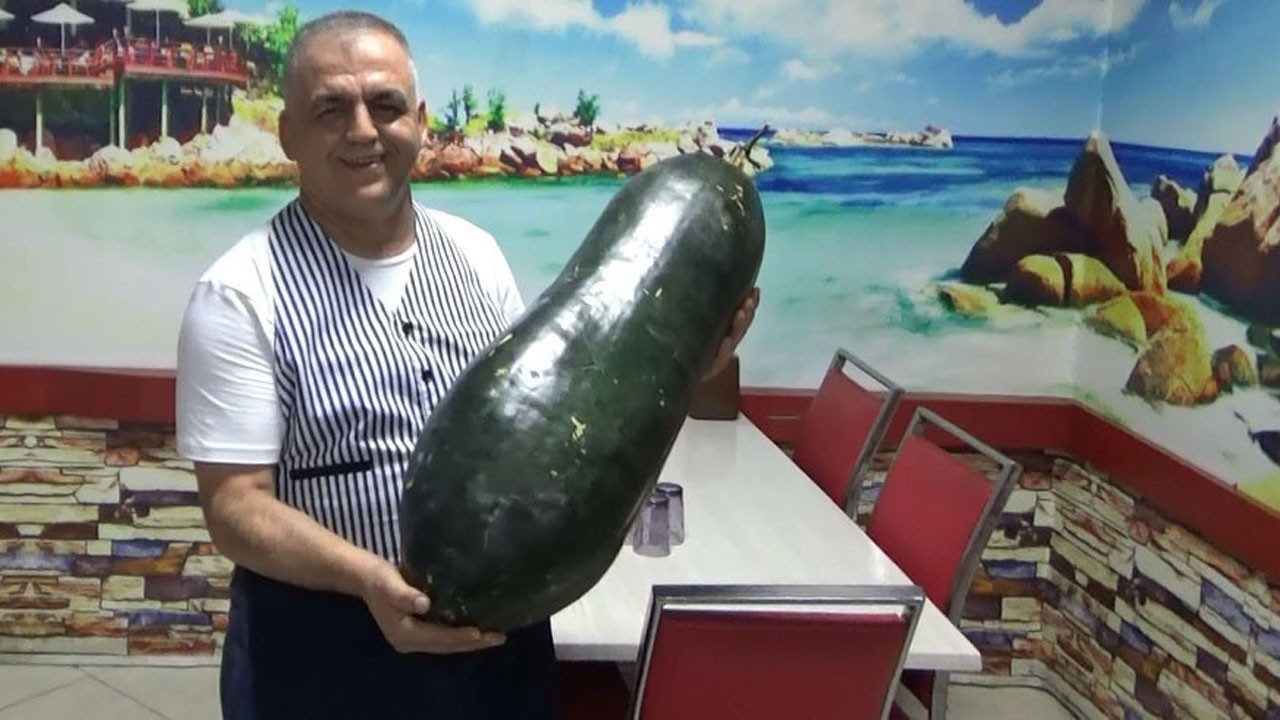 Çin tohumundan üretildi!.. 21 kilogram ağırlığında!