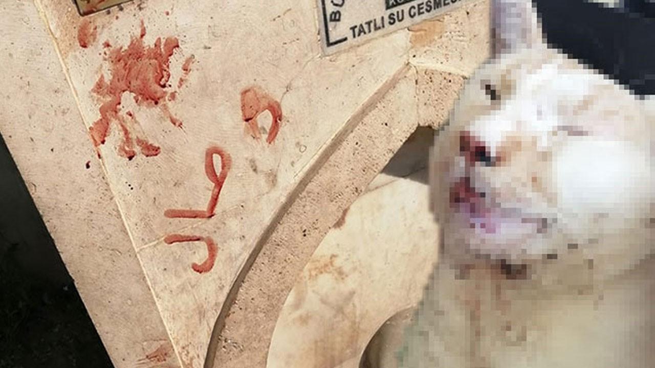 Tüyler ürperten işkencenin adresi Konya!