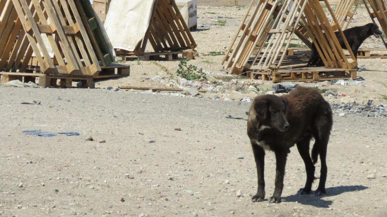 300 köpek ortadan kayboldu