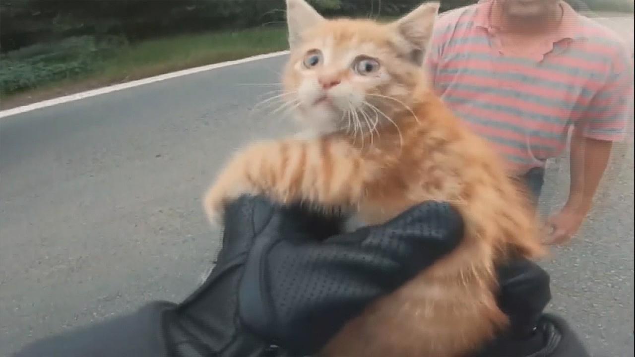 Kediyi önce ezilmekten kurtardı, sonra yuva buldu