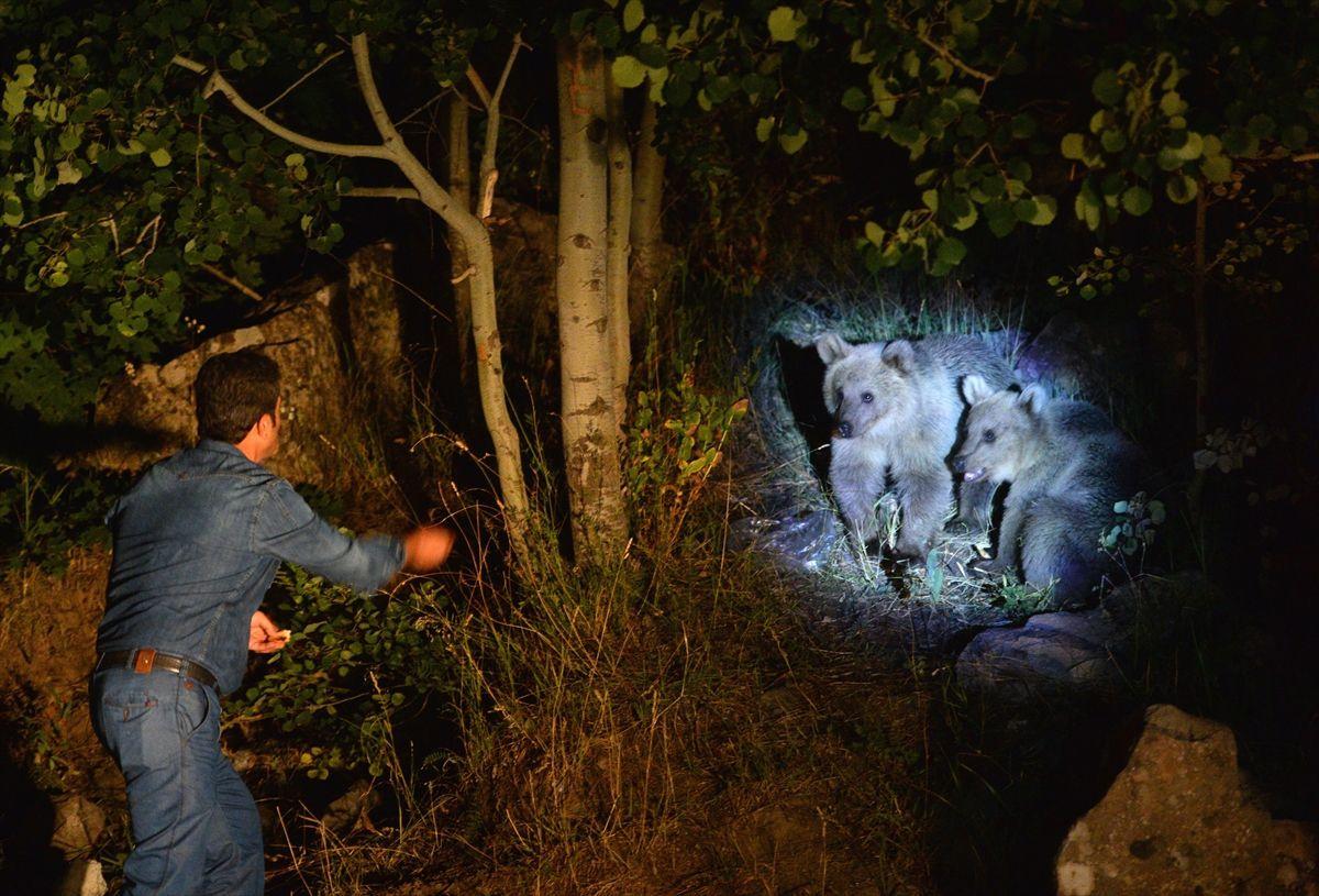Boz ayı yavrularını elleriyle besliyorlar - Sayfa 3