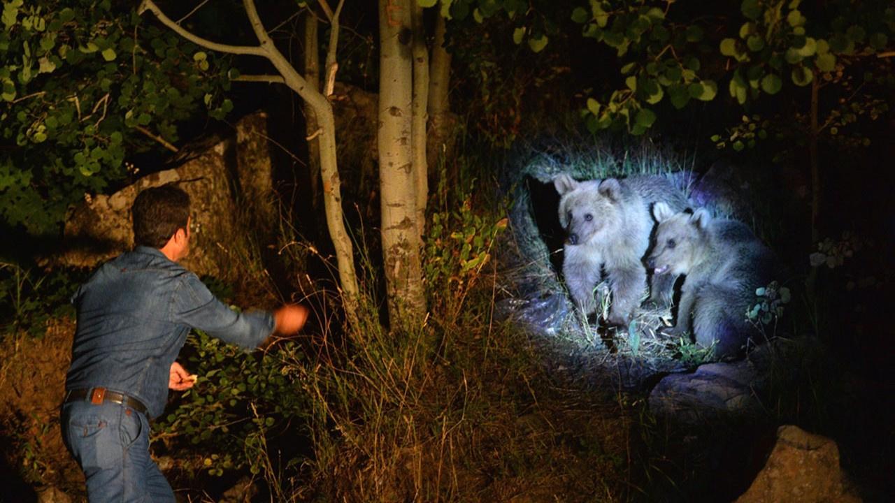 Boz ayı yavrularını elleriyle besliyorlar