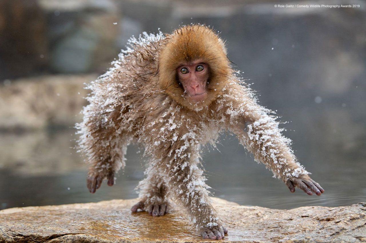 En komik vahşi doğa fotoğrafları - Sayfa 3