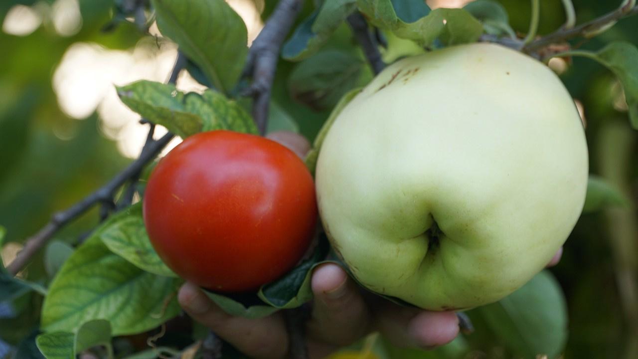 Eskişehir'deki bu meyvenin adını bilen yok!