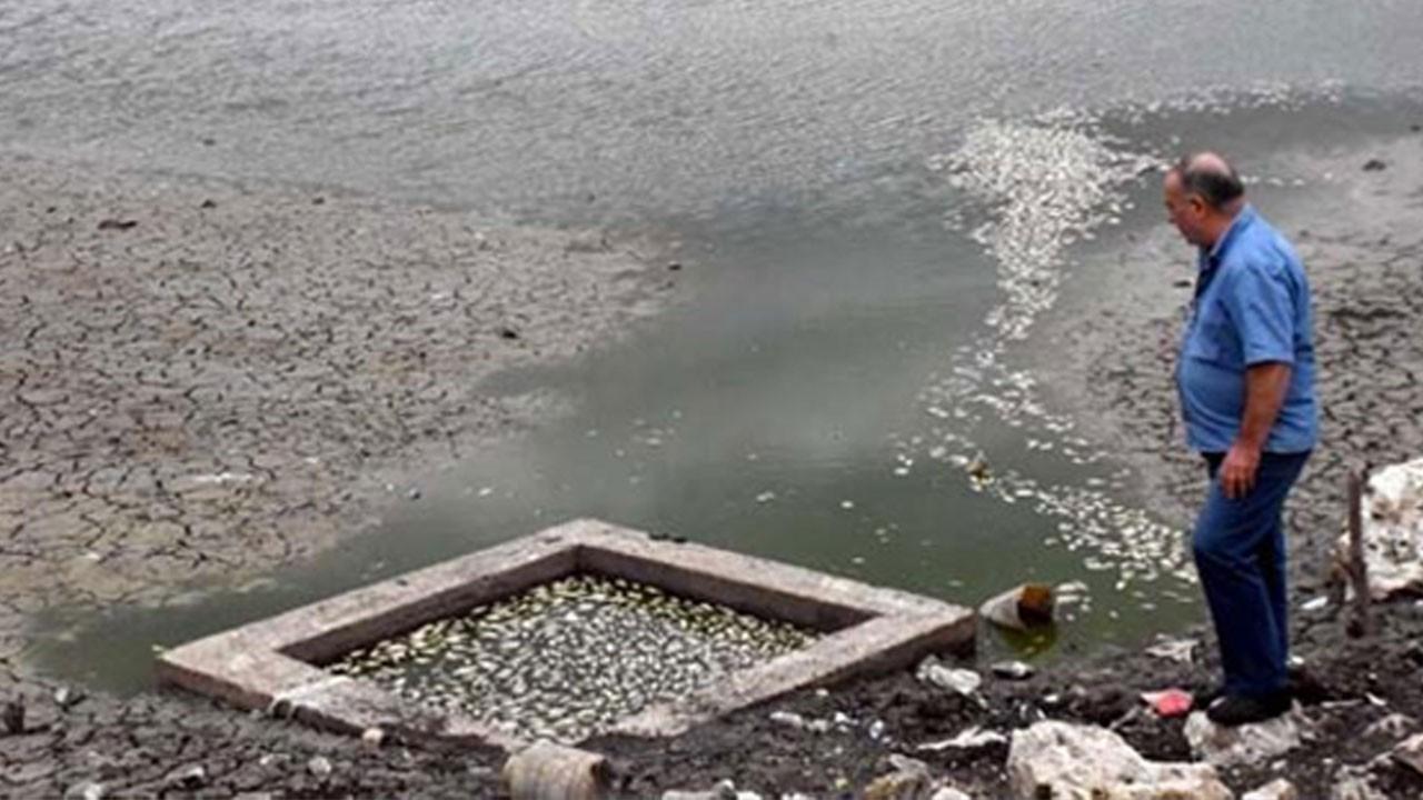 Kuruyan göletteki balıkları yağmur kurtardı