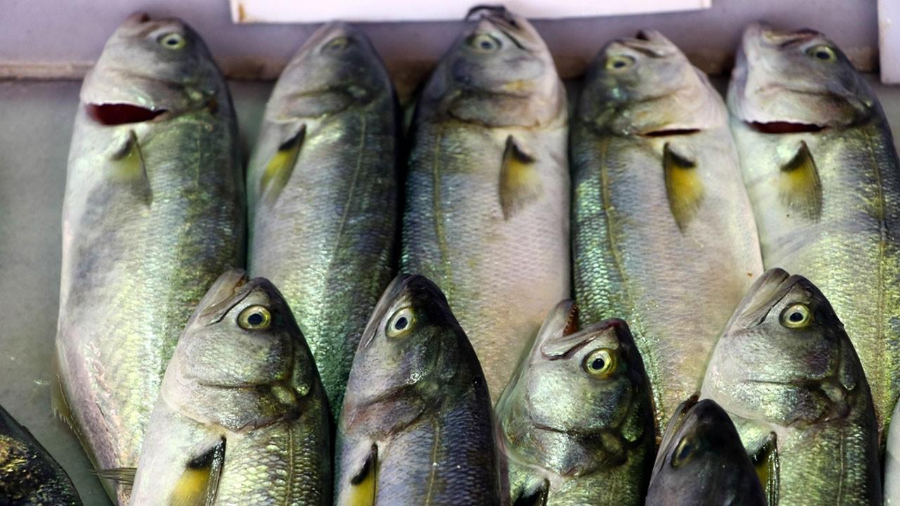 Balık severlere müjde!.. Lüfer başladı!