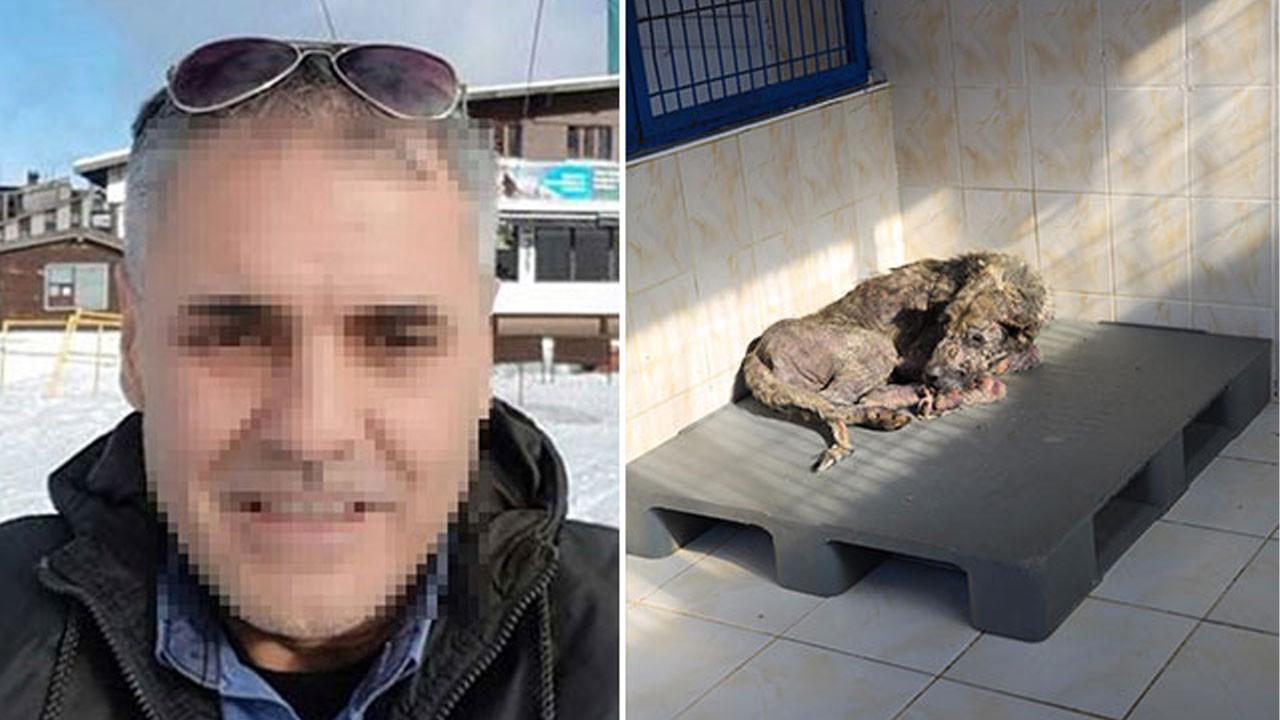 Hayvan düşmanı belediye çalışanı gözaltına alındı
