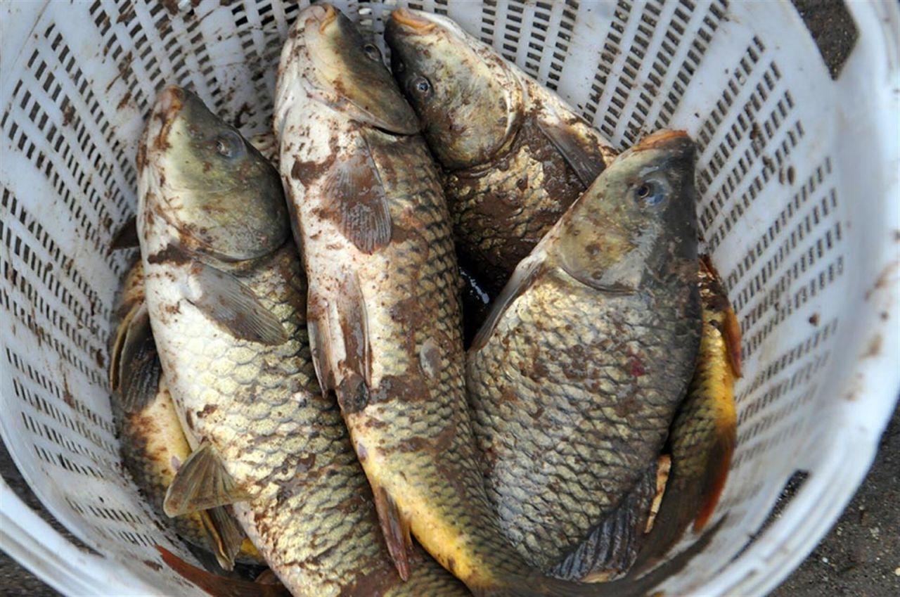 Ölü balıkları çuval ve kasalarla götürdüler - Sayfa 1