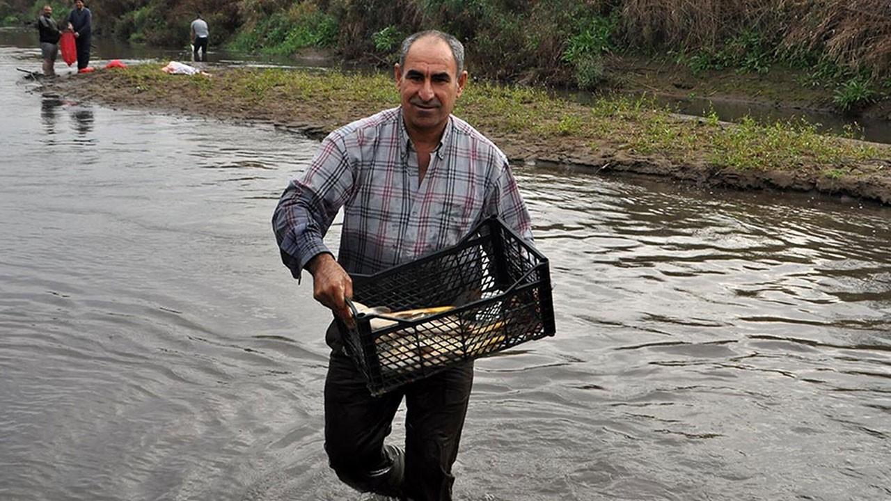 Ölü balıkları kasalarla götürdüler