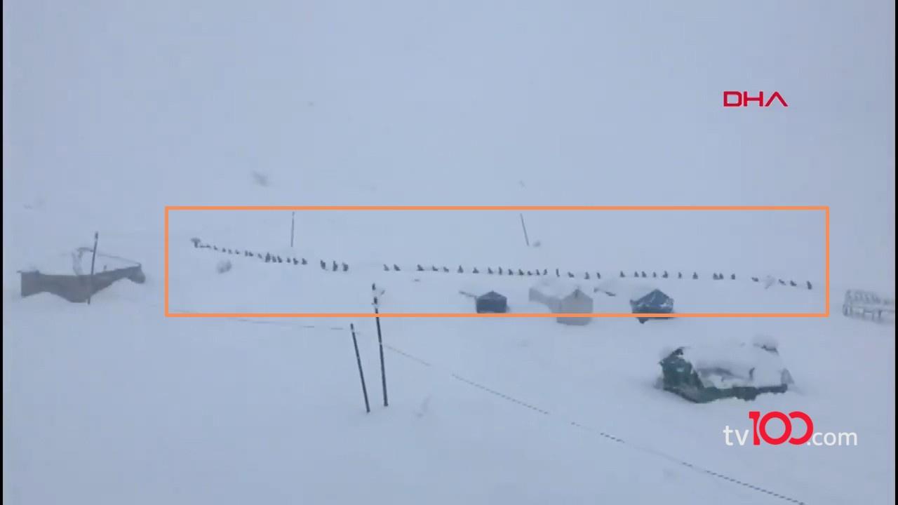 Kış boyunca her gün böyle yürüyorlar