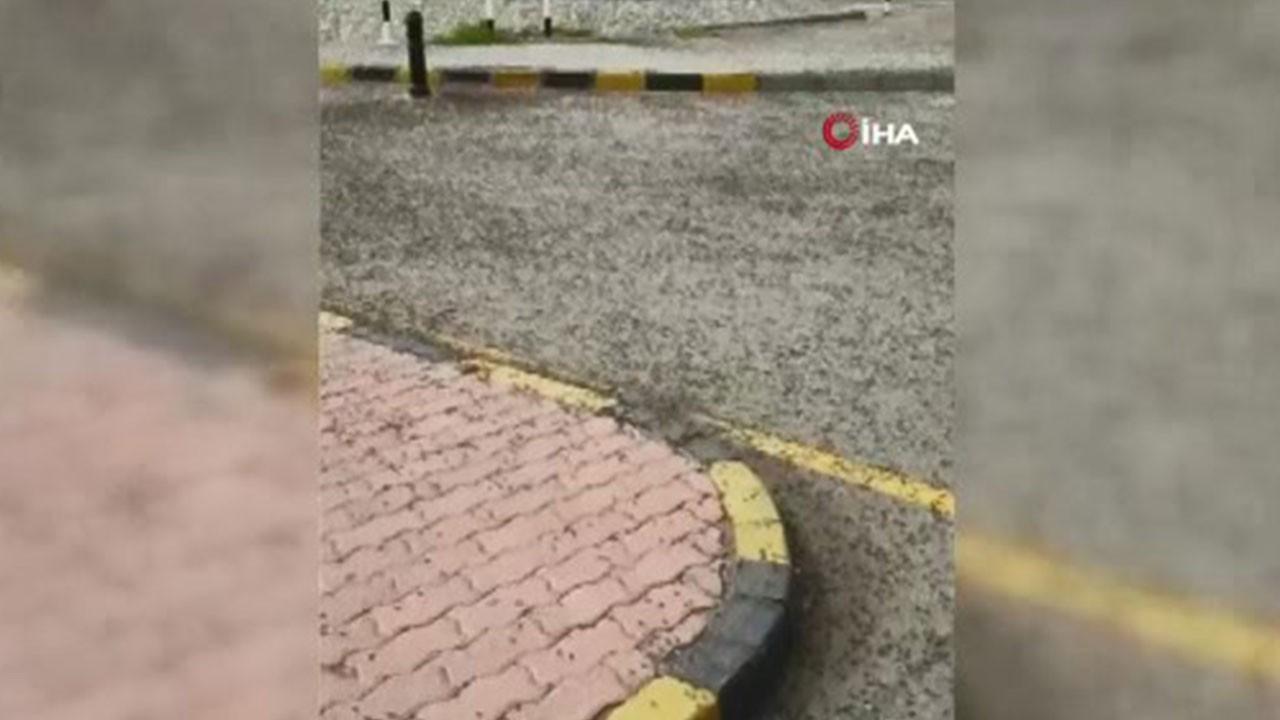 Milyonlarca karınca sokakları istila etti