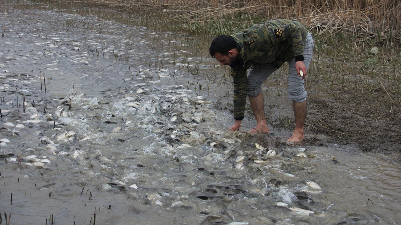 Tarladan balık topladılar
