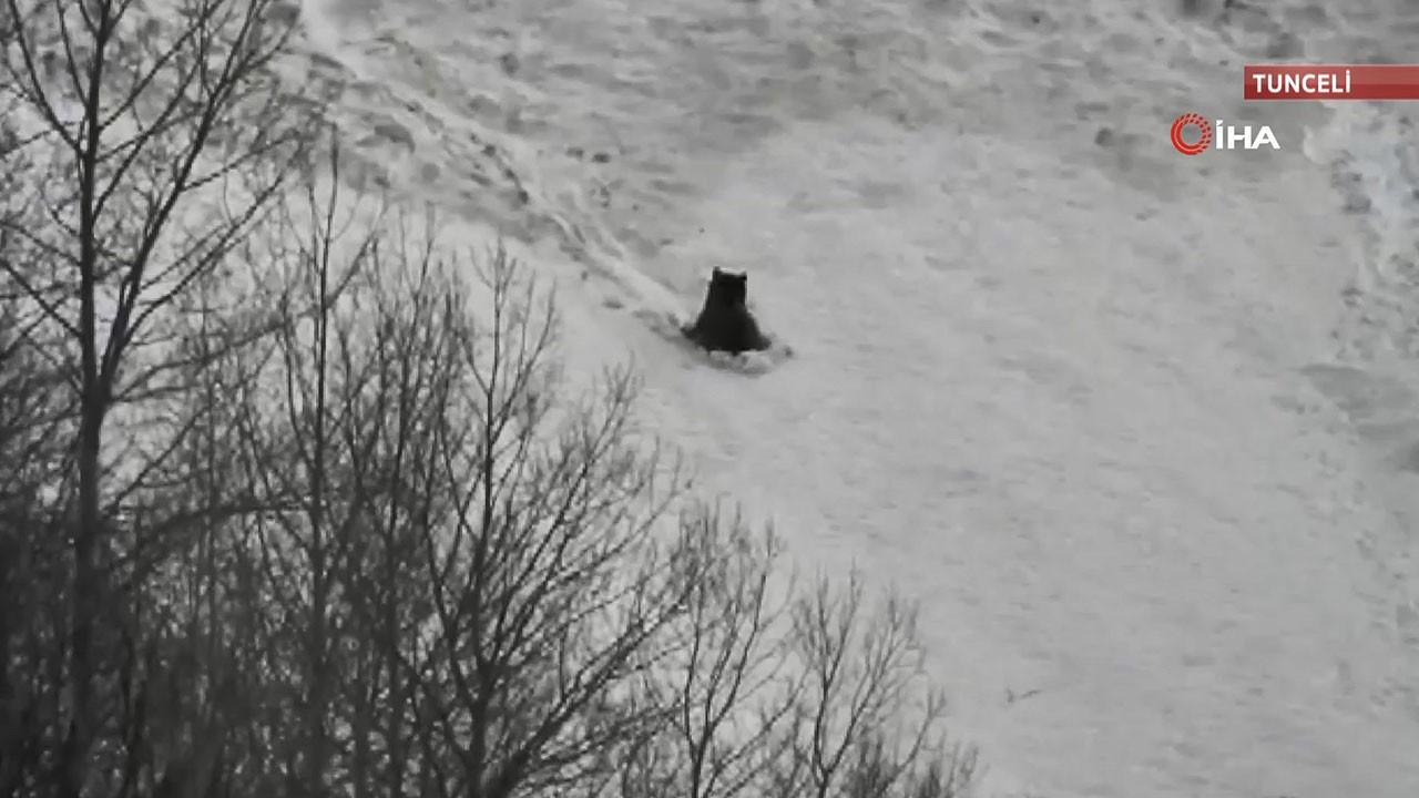 Boz ayıların kar keyfi kamerada