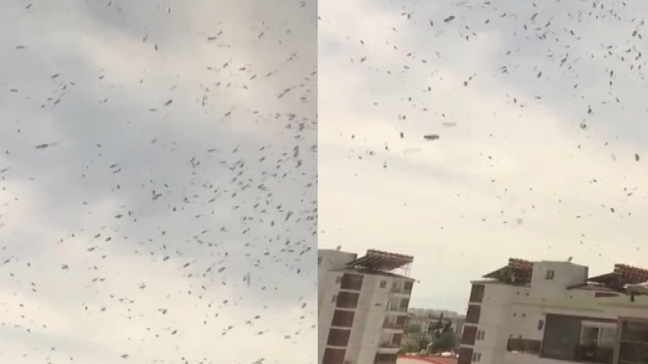 Yüzlerce arı balkon ve pencereleri istila etti!