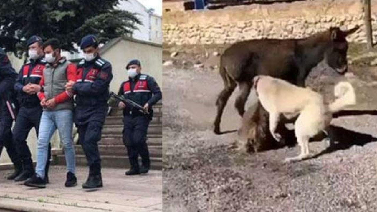 Sıpayı köpeklere öldürten Berat Kaya serbest