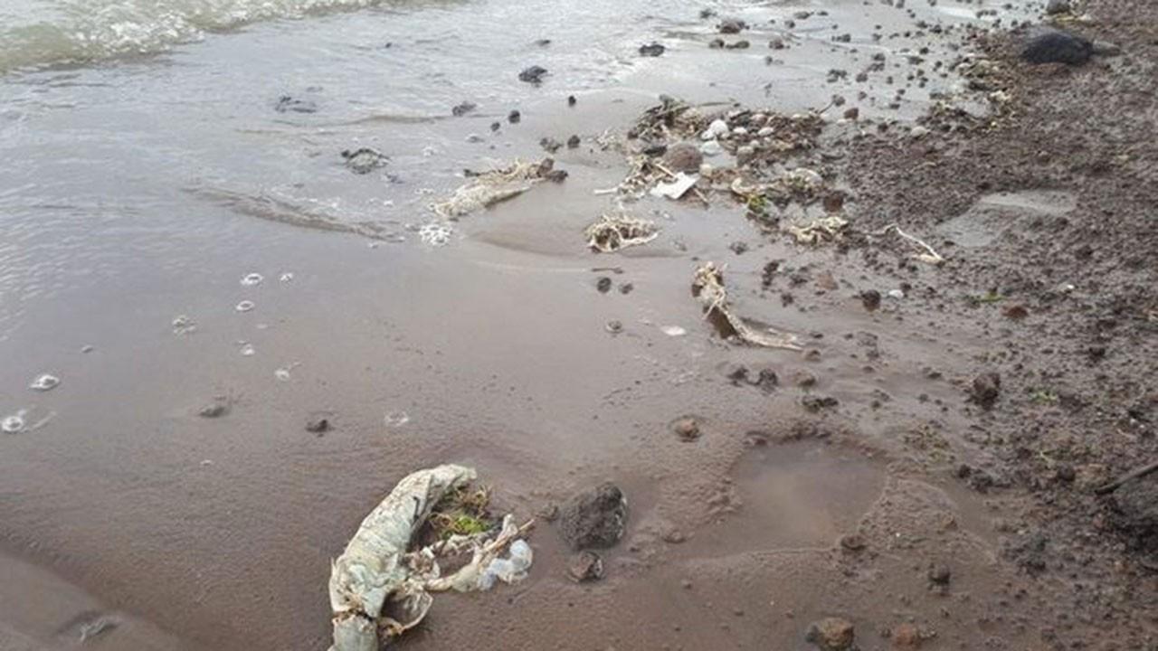 Süphan Gölü'nde toplu balık ölümleri