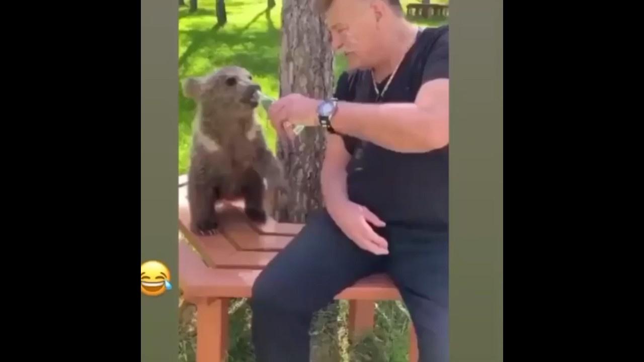 Nuri Alço ayı yavrusuna gazoz içirirse...
