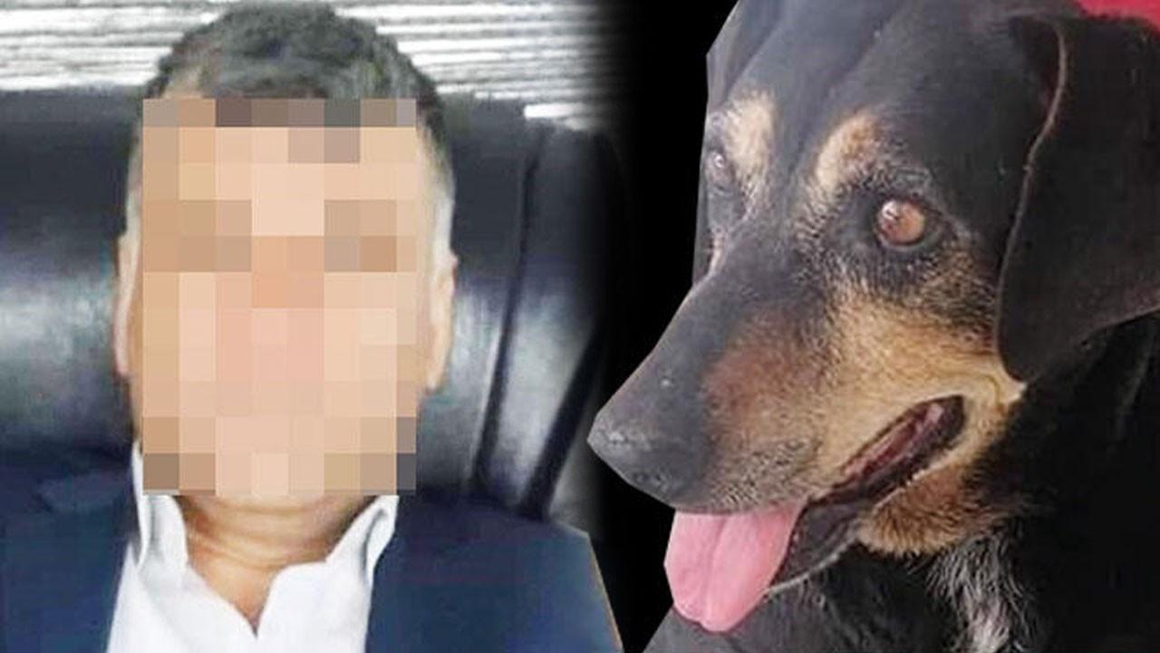 Bir ay boyunca köpeğe işkence ve tecavüz etti!