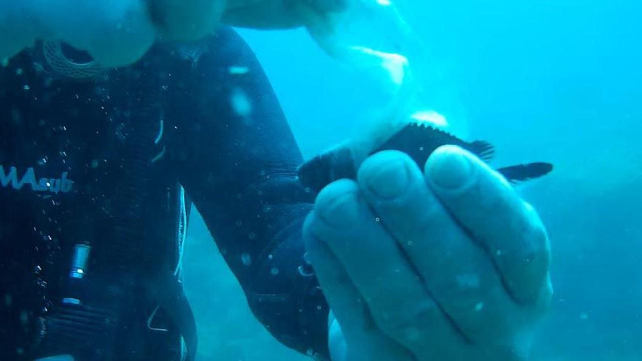 Islak mendile takılan balığı kurtardılar!
