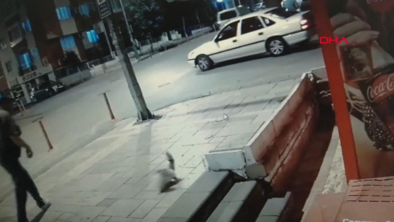 Marketindeki sucuğu yiyen sokak kedisini tekmeledi