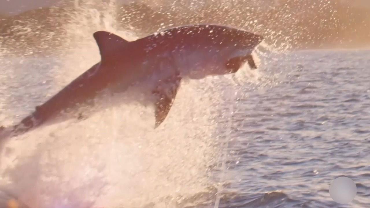 Eşini kurtarmak için köpekbalığını yumrukladı