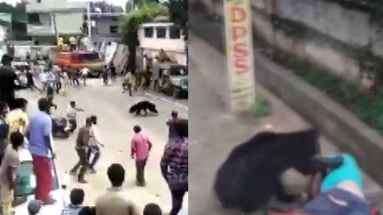 Sokak ortasında ayı saldırısı!