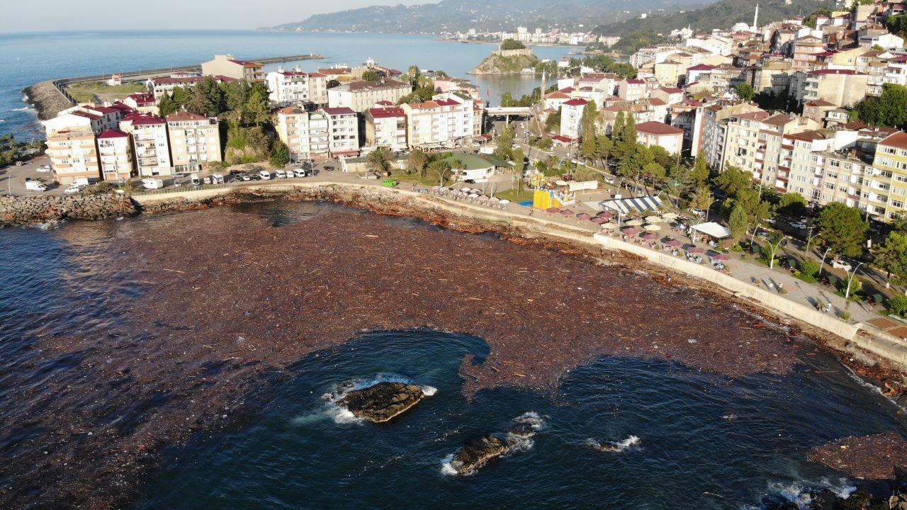 Selin sürüklediği ağaçlar deniz yüzeyini kapladı