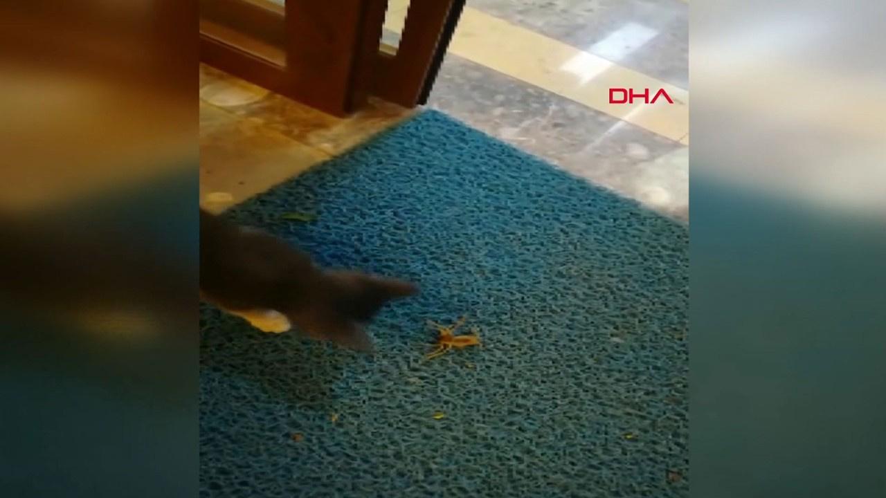 Dev örümcek ile yavru kedinin kavgası kamerada
