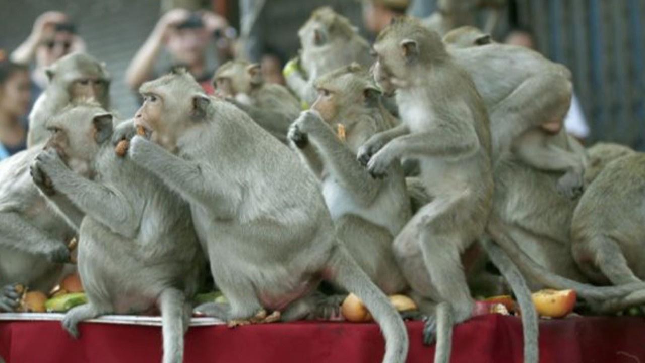 Tayland'ı maymunlar bastı!