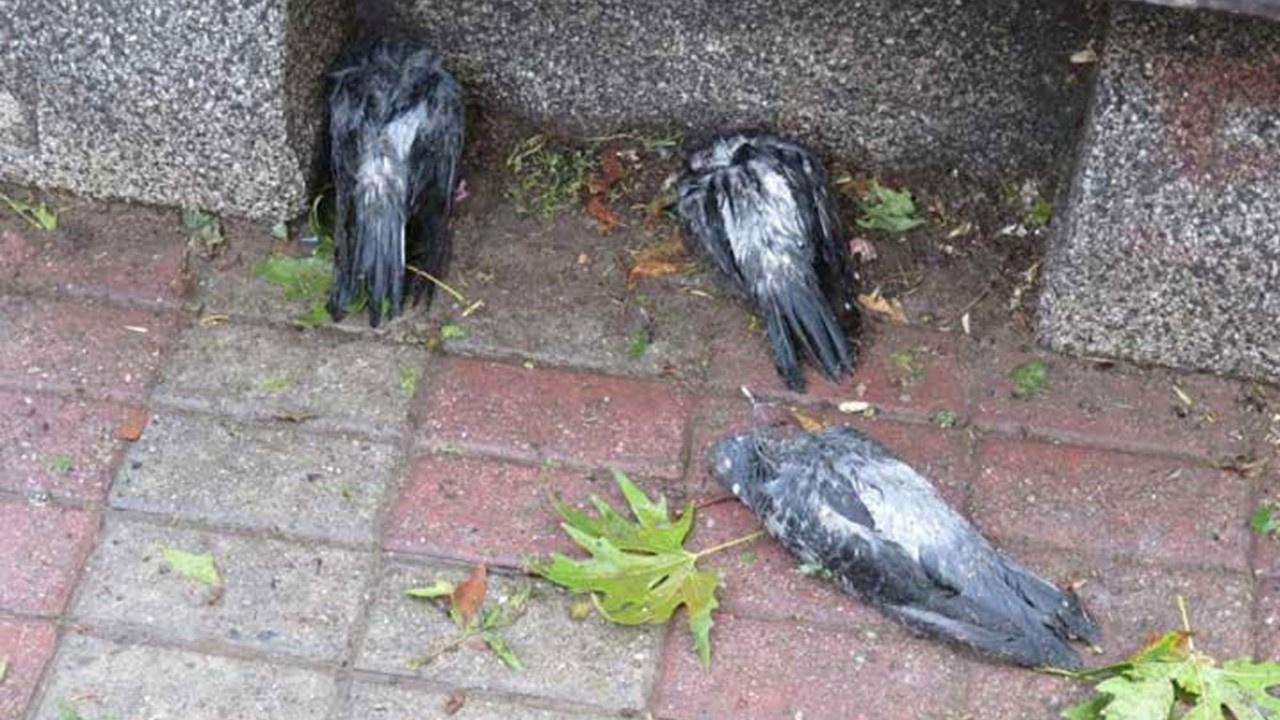 Dolu kuşları öldürdü