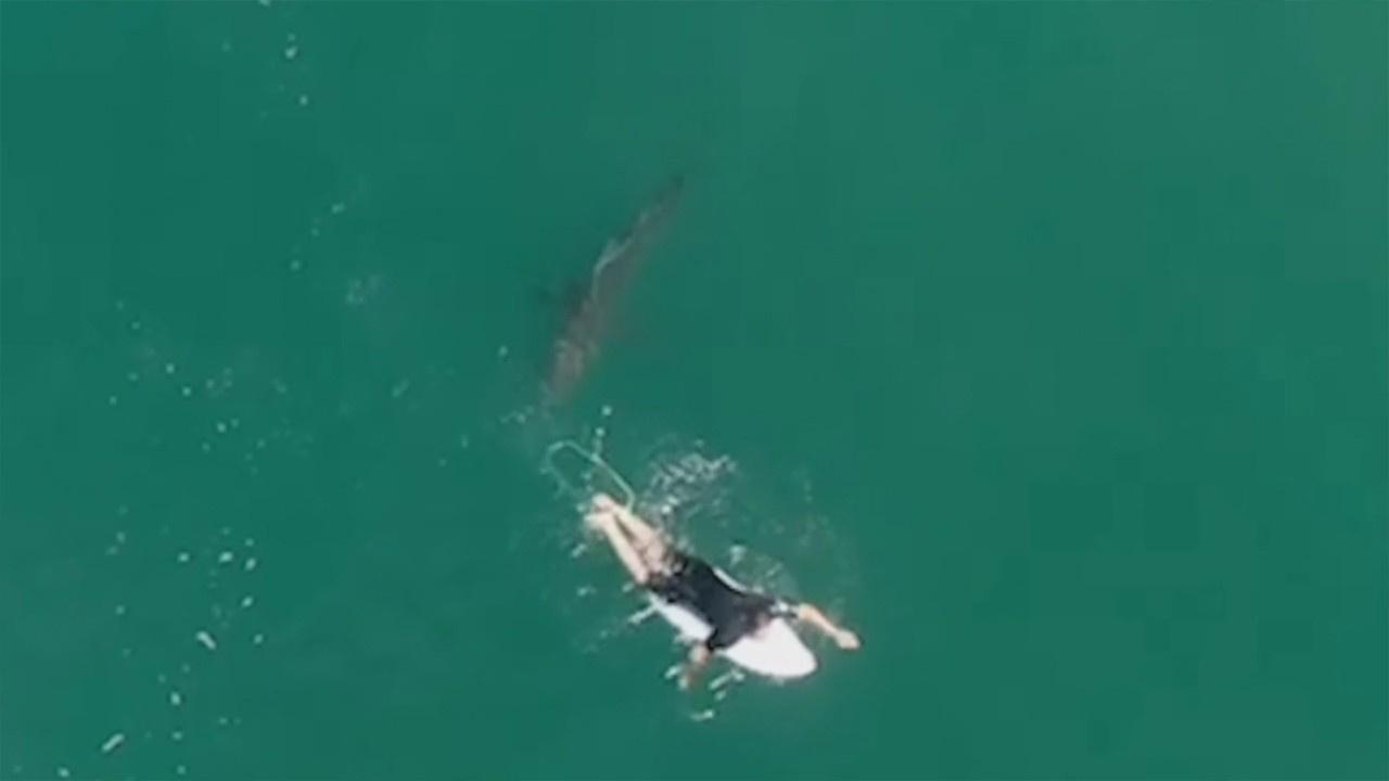 Sörfçü köpek balığından son anda böyle kurtuldu