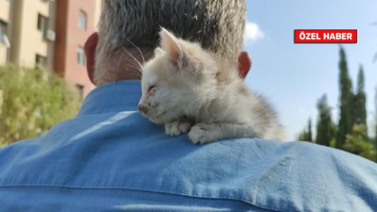 tv100 ekibi yardıma muhtaç kediye sahip çıktı!
