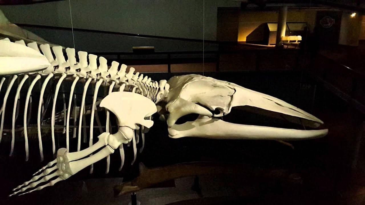 5 bin yıllık balina iskeleti bulundu