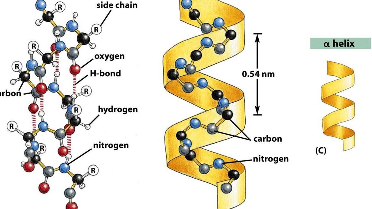 Proteindeki sır çözüldü mü?