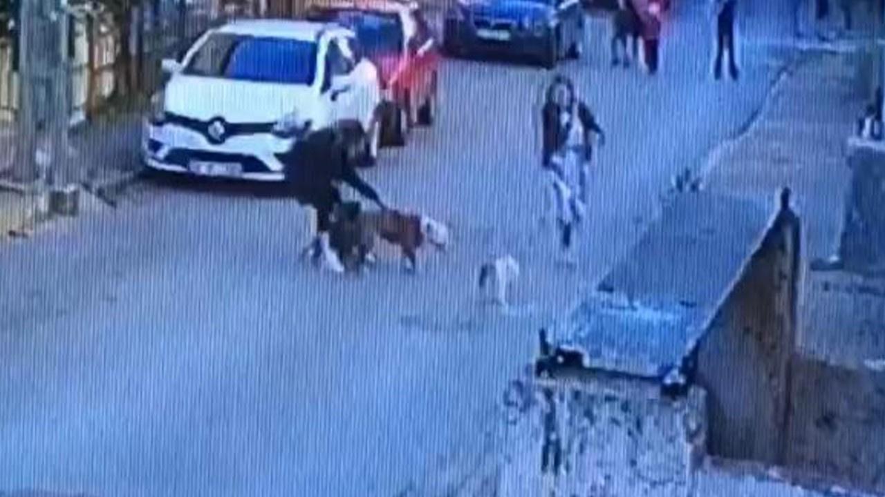 Ataşehir'de pitbull dehşeti!