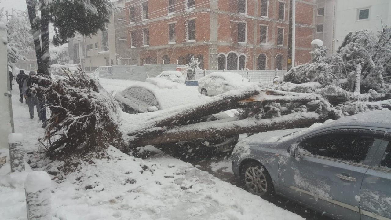 Ağaç park halindeki otomobilin üzerine yıkıldı