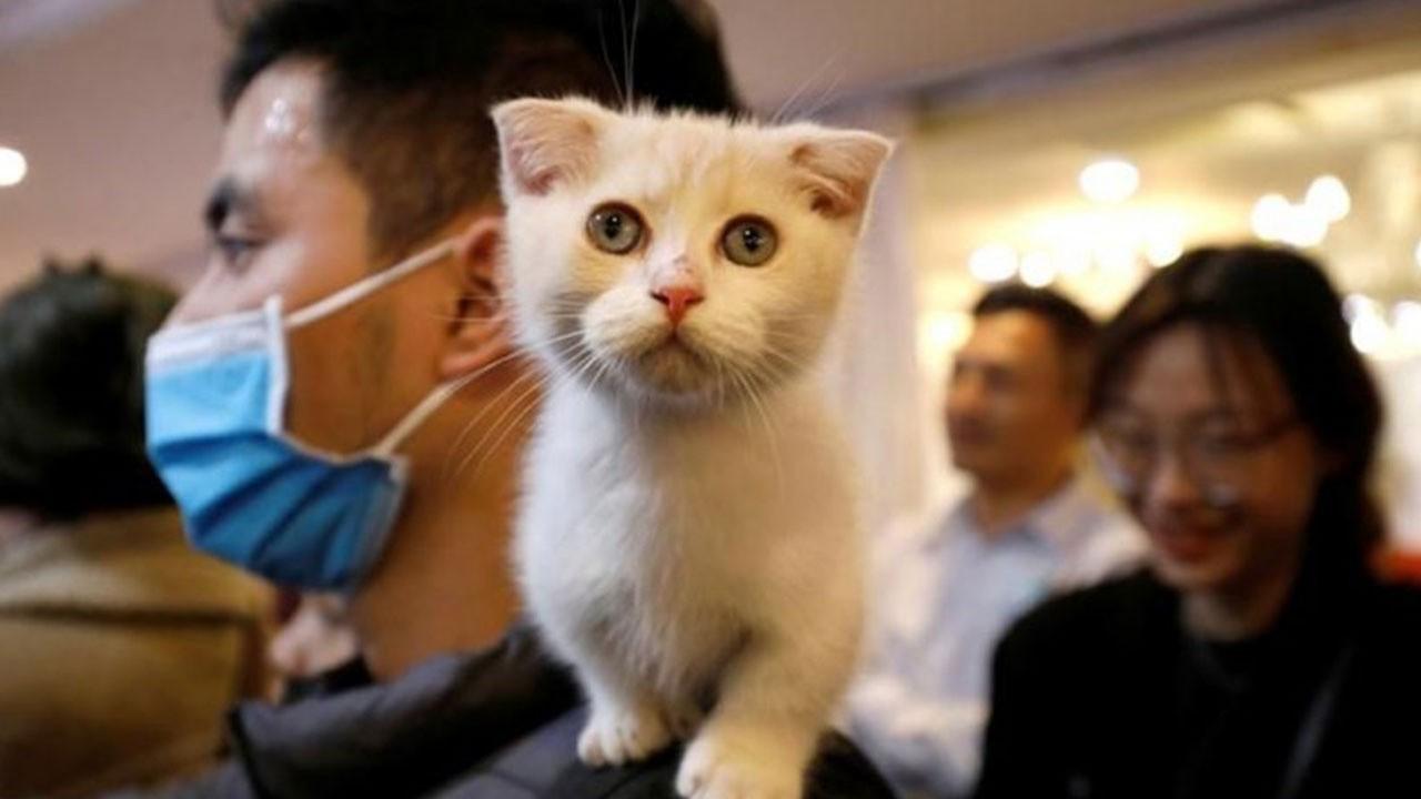 Bir ilk! Kedi de korona pozitif!