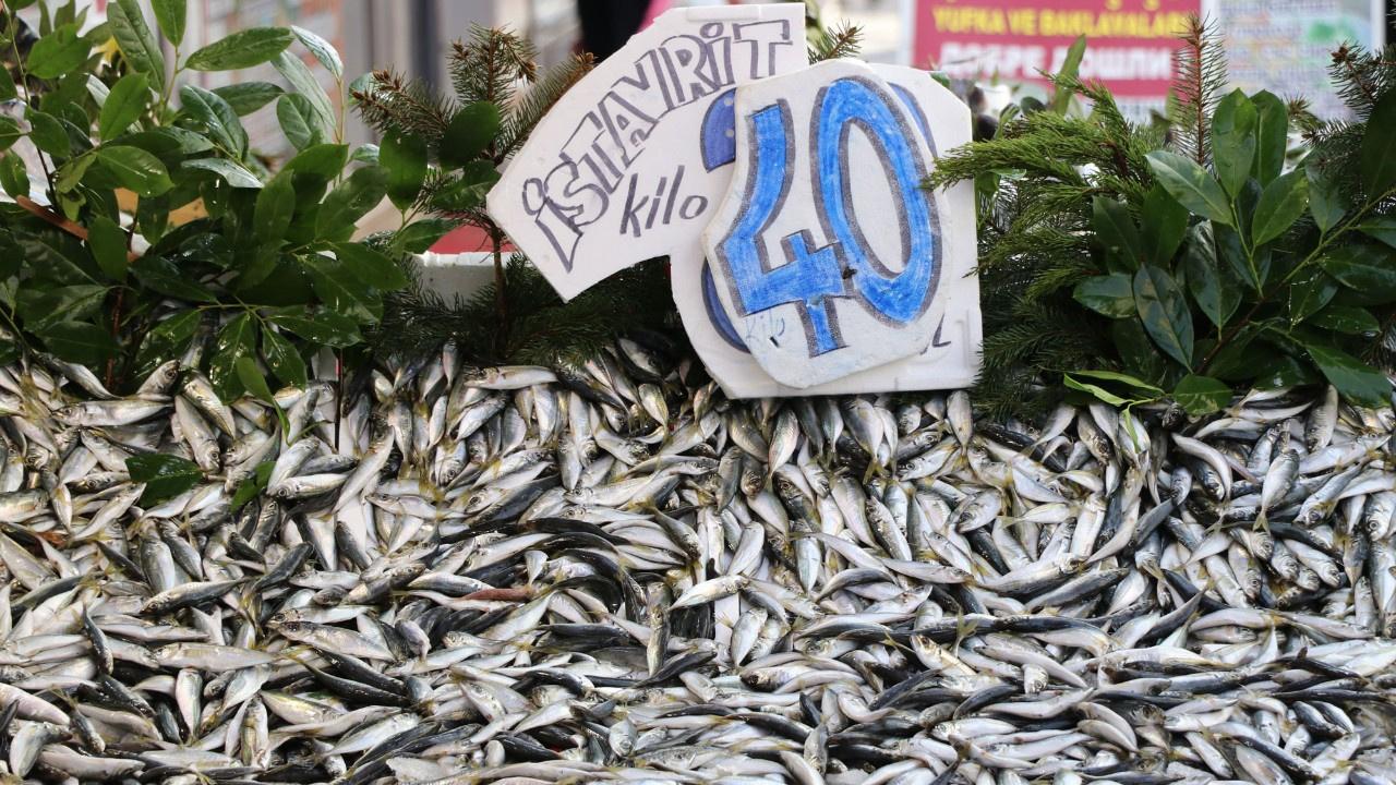 Lodos balık fiyatlarını vurdu